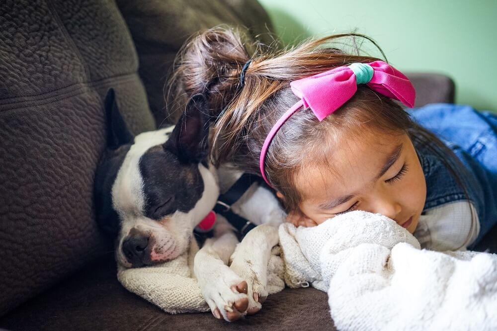 Young girl and her Boston terrier nap on the couch